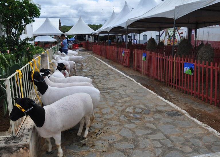 Criadores se organizam e mostram a força da caprinocultura no Cariri